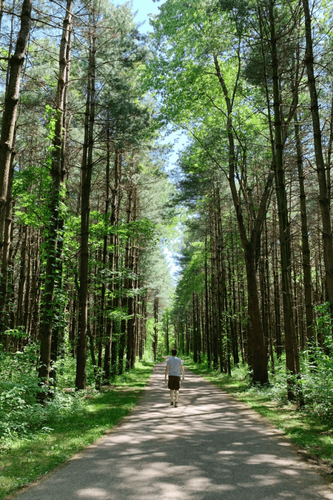 tall pines in walnut woods metro park
